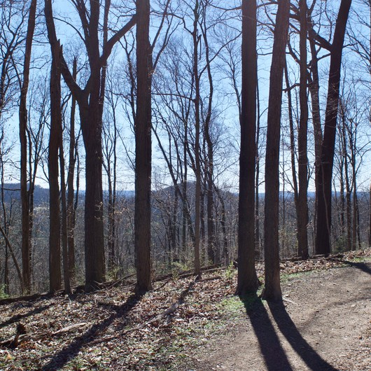 Harpeth Woods Trail