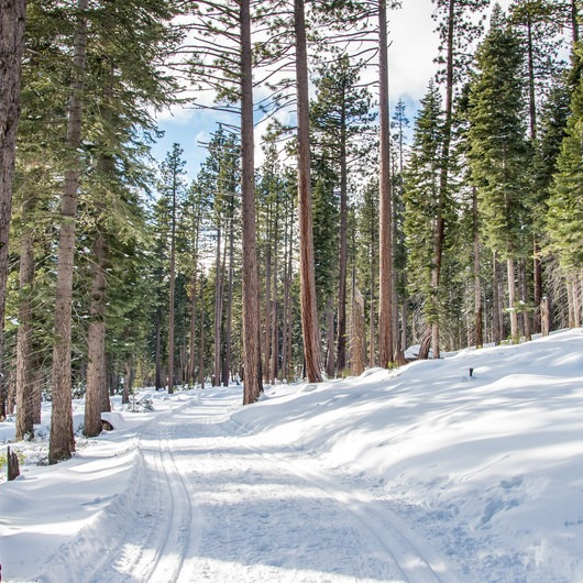 Red Trail Snowshoe in Sugar Pine Point State Park