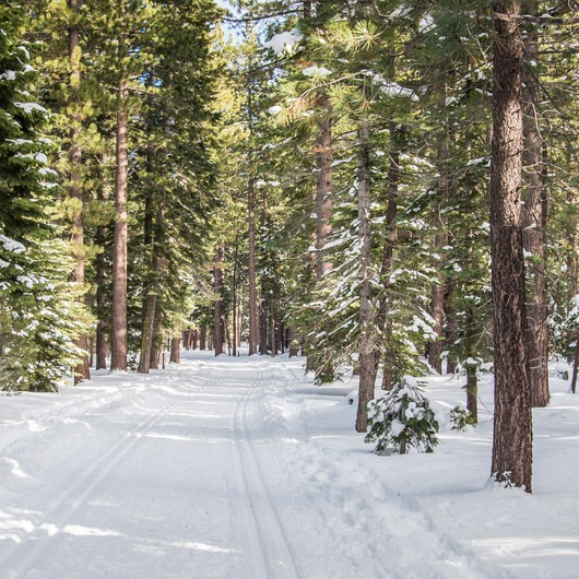 Blue Trail Snowshoe in Sugar Pine Point State Park