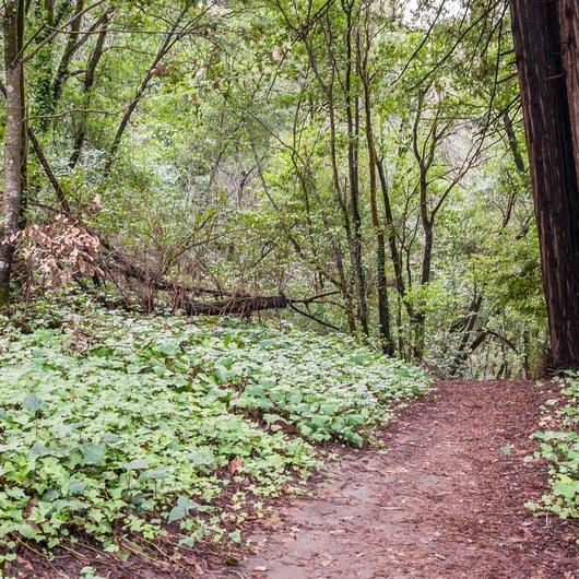 Redwood Lower Loop Hike