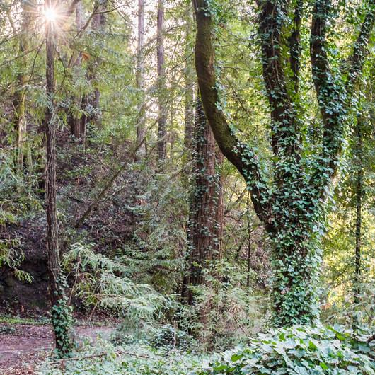 Enchanted Trail Hike