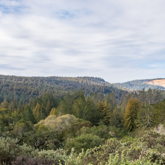 Henry Cowell Redwoods State Park Campground