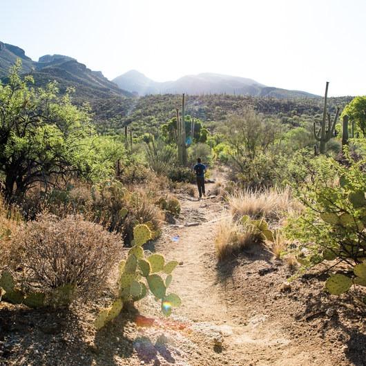 Bear Canyon to Seven Falls Trail