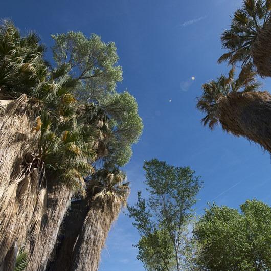 Cottonwood Springs Nature Trail - Mastadon Peak Loop