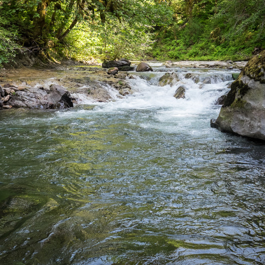 Fernview Swimming Holes