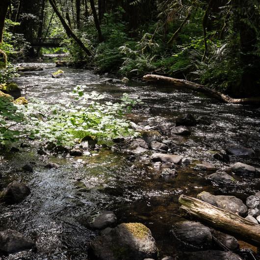 Shotgun Creek Recreation Area
