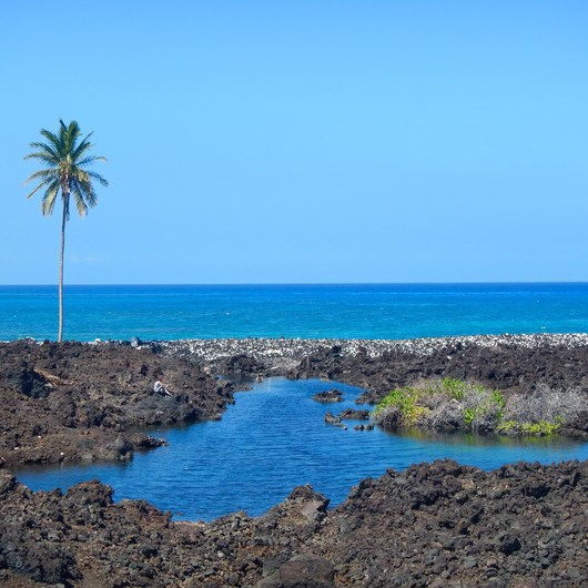 Akahu Kaimu Bay / Lone Palm Pond