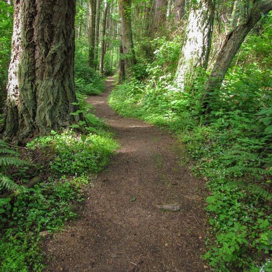 Cross Island Trail