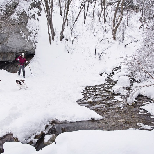 Ferguson Canyon Snowshoe
