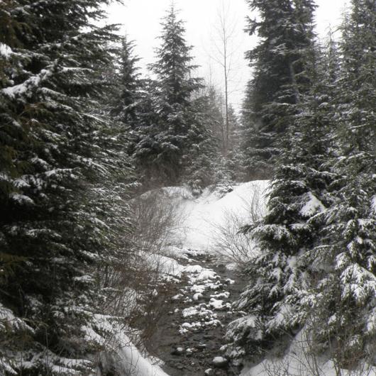 Gold Creek Pond Loop