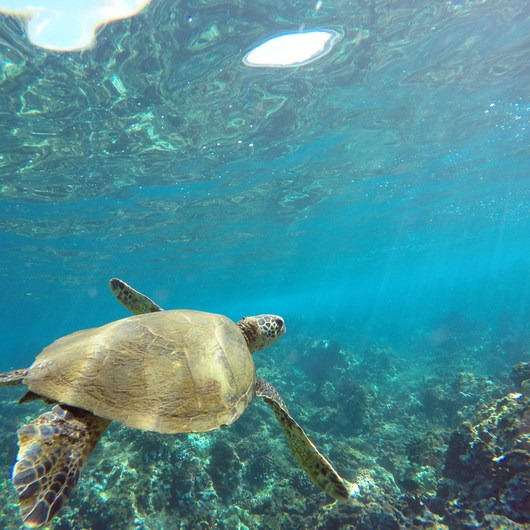 Ulua Beach + Mokapu Beach Park