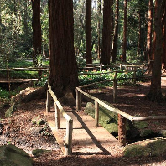 Stern Grove + Pine Lake Park