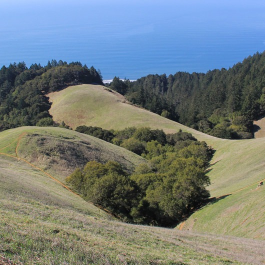 Coastal Trail, Pantoll to W Ridgecrest Blvd