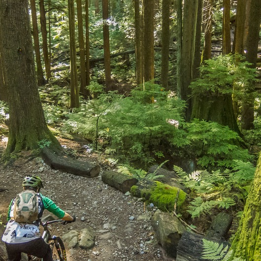 Mount Seymour Trails: Lower Mountain Loop