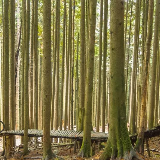 Woodlot Mountain Bike Trails: Blood Donor, Giant Killer + Hoots