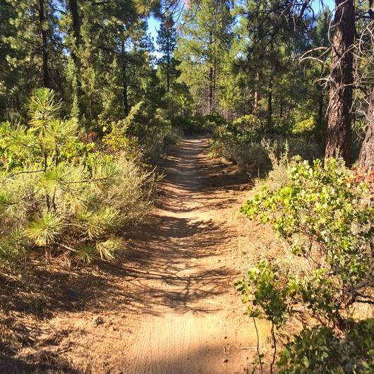 Phil's Trail Complex: Ben's Trail to Phil's Trail Loop