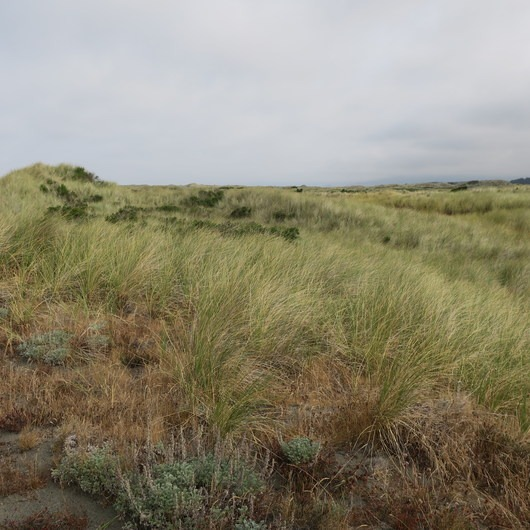 Tolowa Dunes State Park