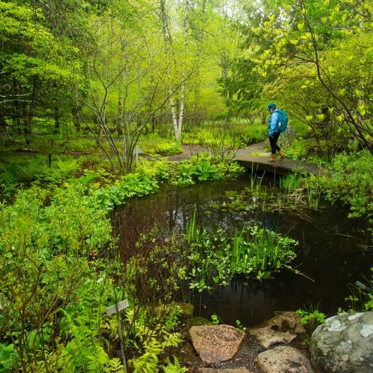 Sieur de Monts Nature Center + Wild Gardens