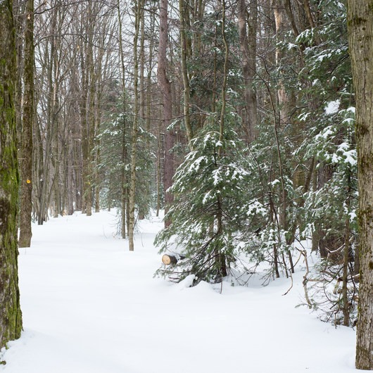 Carpenter Road Ski Trails