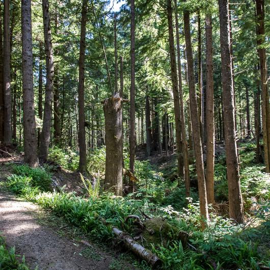 Kwis Kwis Trail