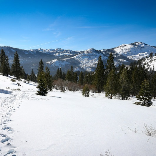 Donner Ridge Snowshoe via Johnson Canyon