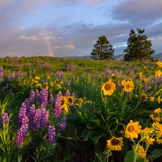 Wildflowers in the Columbia River Gorge - 10 Hidden Gems