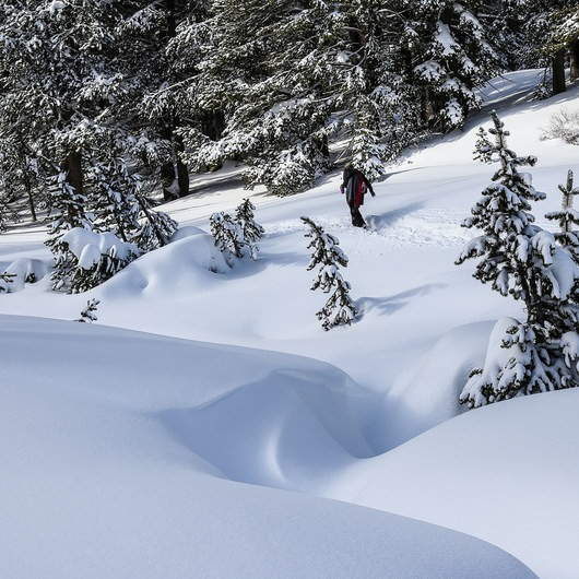 Tahoe Meadows: Ophir Creek
