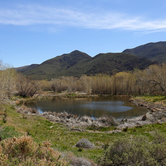 McCarran Ranch Preserve River Trail