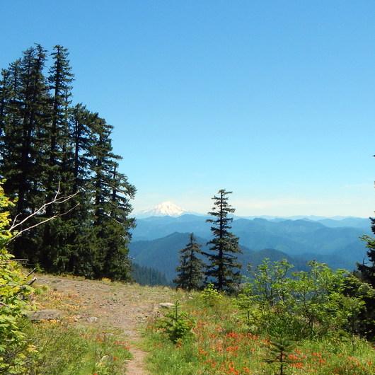 Crabtree Valley Hike