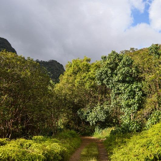 Kamananui Valley Road
