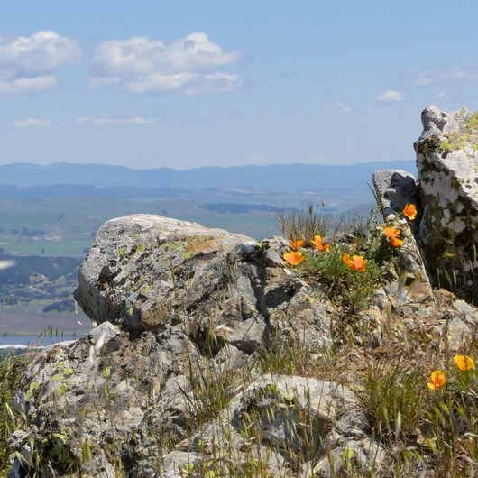 Novato Hill Climb