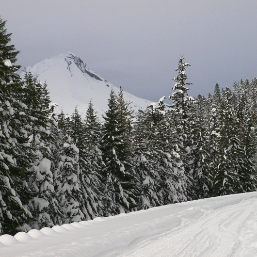 Iron Creek Ski + Snowshoe Trail