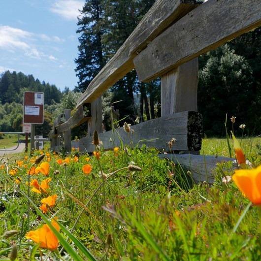 Sky Trail Loop, Bear Valley to Mount Wittenberg