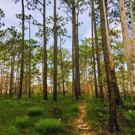 Torreya Trail