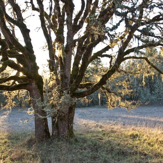 Mount Pisgah Arboretum Hike