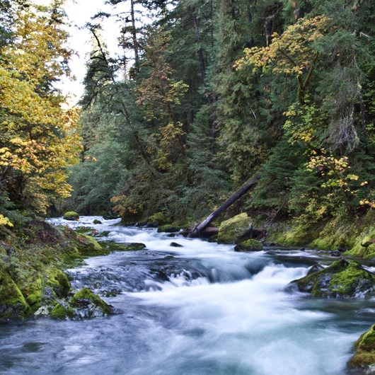 South Salmon Creek Trail and Eugene to Crest Trail Loop