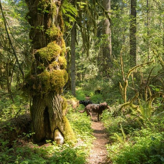 South Willamette Trail Hike