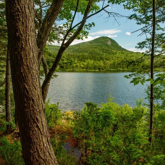 Sawyer Pond Campsites