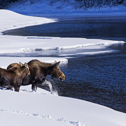 Snake River Snowshoe via Jackson Lake Dam