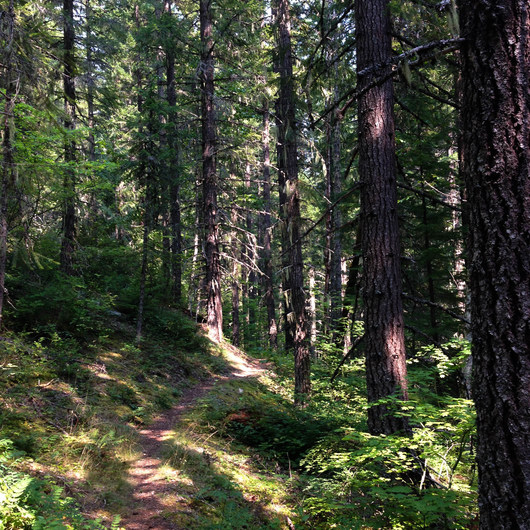 Upper Salmon River Trail