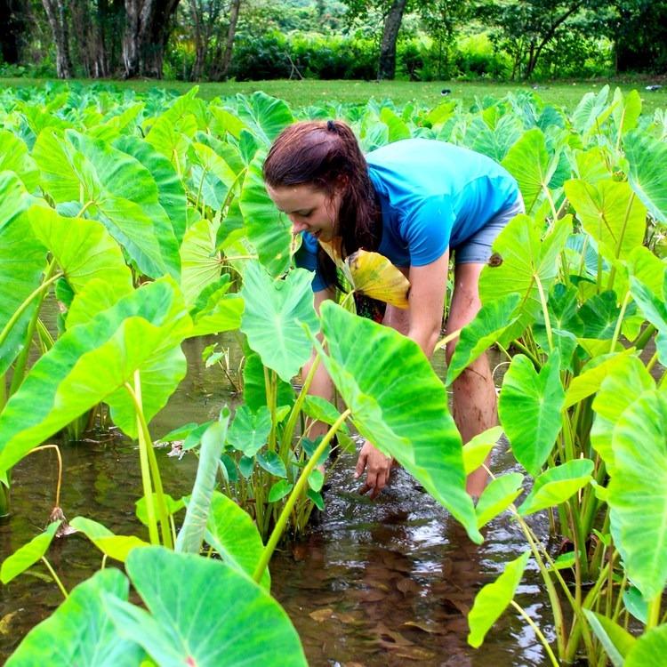 Volunteering Vacations on Hawai'i's Big Island