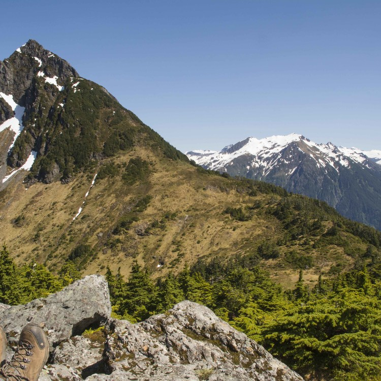 Seven Largest National Forests