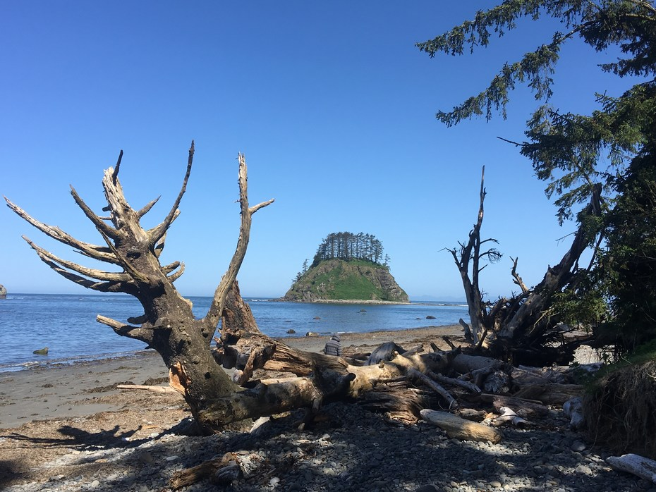 ozette triangle loop trail outdoor project
