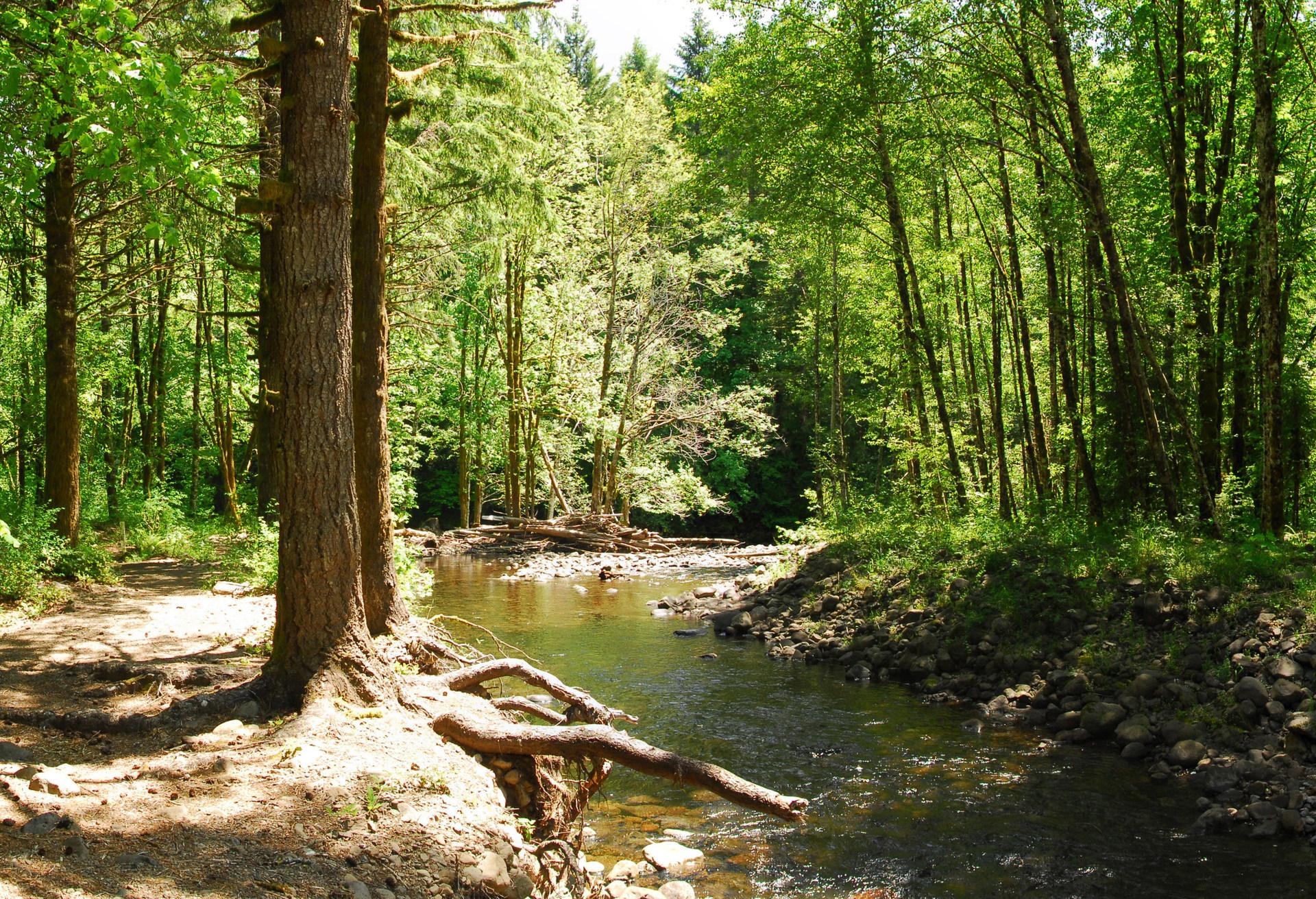 elk creek jewish personals Hiking trails around elk creek - elk creek, va - aarp in your.