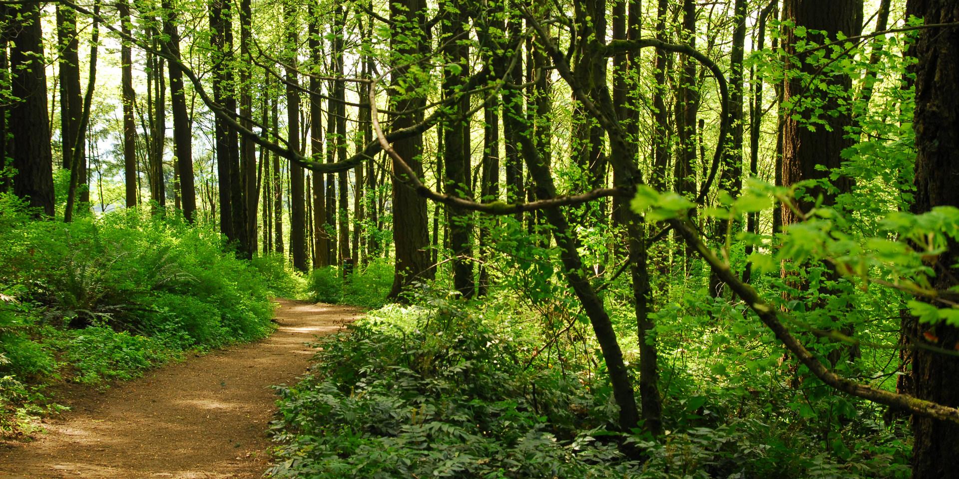 Marquam Nature Park Oregon