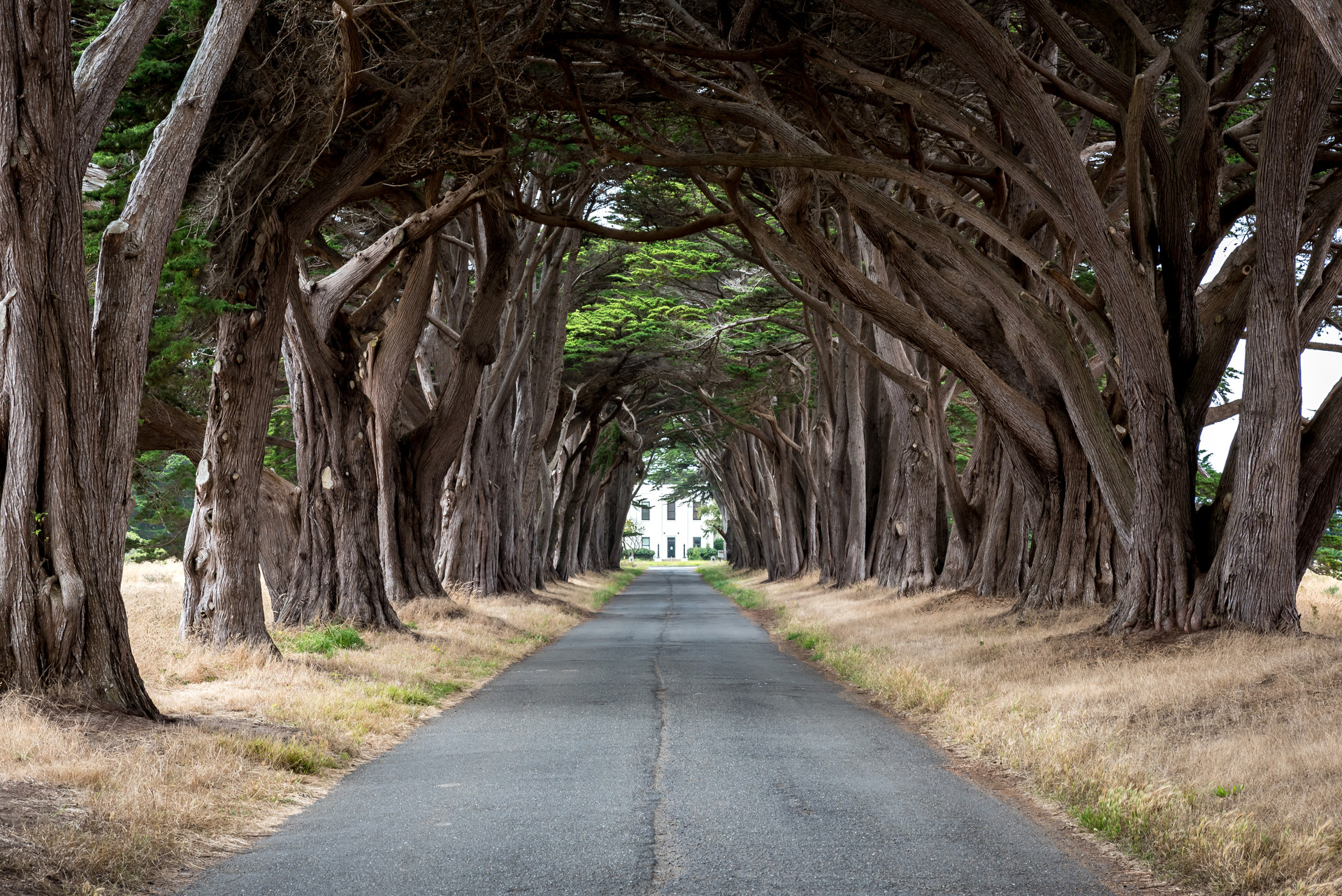 cypress tree tunnel outdoor project. Black Bedroom Furniture Sets. Home Design Ideas