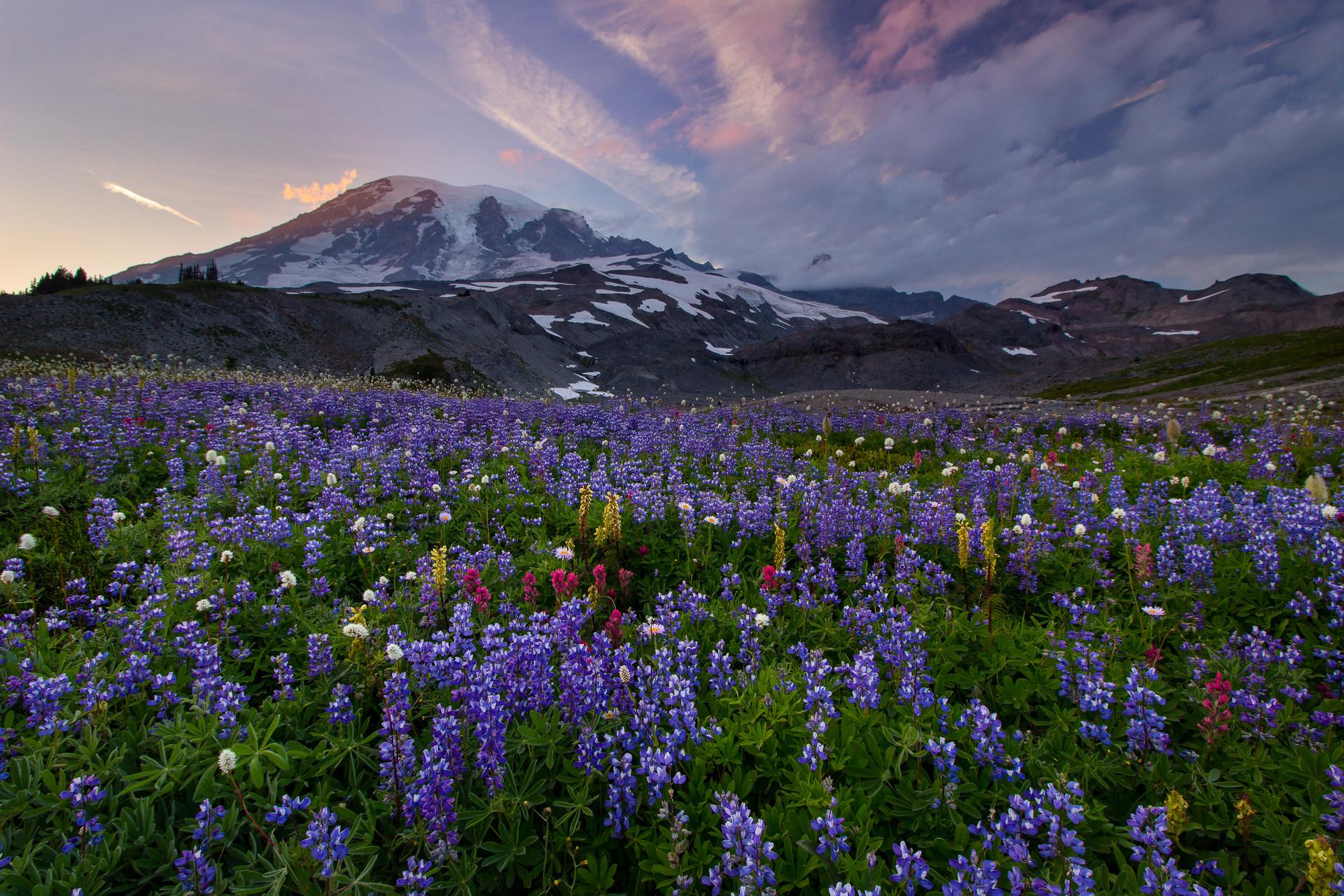 Mount Rainier National Park | Outdoor Project