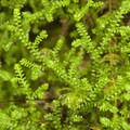 Unidentified species (help us identify it by providing feedback).- An Ode to Moss!