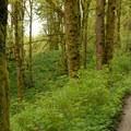 - Wild Cherry Trail Loop