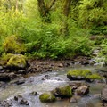 Balch Creek.- Forest Park, Lower Macleay Trail Loop